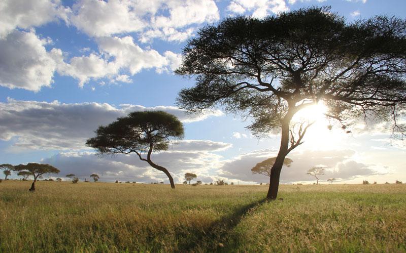 TANZANIE ET ZANZIBAR : L'AFRIQUE AUTHENTIQUE